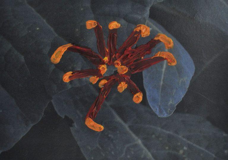 Chrysanthemum on a Photograph